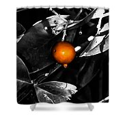 Single Orange Berry Shower Curtain