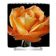 Single Orange Rose Shower Curtain