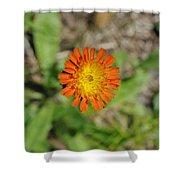 Single Orange Wild Flower Shower Curtain