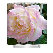 Single Peace Rose Shower Curtain
