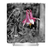 Single Pink Columbine Shower Curtain