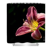 Single Pink Day Lily Shower Curtain