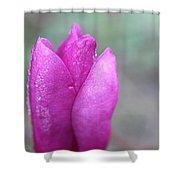 Single Pink Magnolia Shower Curtain