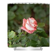 Single Pink Rose Shower Curtain