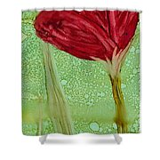 Single Poppy Shower Curtain