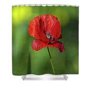 Single Poppy On Green Background Shower Curtain