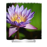 Single Purple Water Lily Number One Shower Curtain