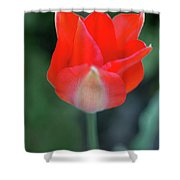 Single Red Shower Curtain
