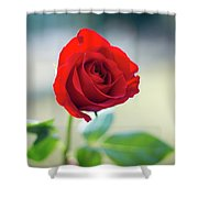 Single Red Rose Shower Curtain