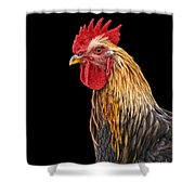 Single Rooster Shower Curtain