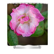 Single Rose 2 Shower Curtain