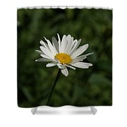 Single Shasta Daisy Bloom Shower Curtain