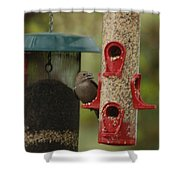 Single Songbird At Feeder Shower Curtain