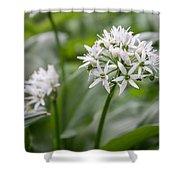 Single Stem Of Wild Garlic Shower Curtain