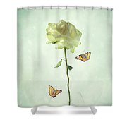 Single Stem White Rose Shower Curtain