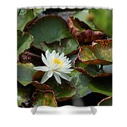 Single Water Lilly  Shower Curtain