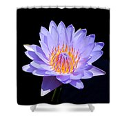 Single Water Lily Shower Curtain
