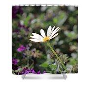 Single White Daisy On Purple Shower Curtain