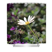 Single White Daisy On Purple Shower Curtain