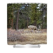 Single White Tail Deer Shower Curtain