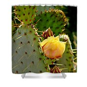 Single Yellow Cactus Bloom 050715a Shower Curtain