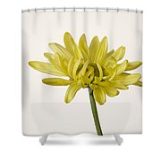 Single Yellow Daisy Shower Curtain