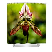 Singular Beauty Shower Curtain