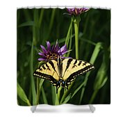 Sipping Flowers Shower Curtain