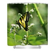 Sipping On Blackberry Blossoms Shower Curtain