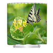 Sipping Swallowtail Shower Curtain