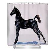 Sir Clarence Ronald - Saddlebred Colt Shower Curtain