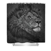 Sir Lion Shower Curtain