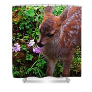 Sitka Black-tailed Fawn Shower Curtain
