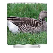 Sitting Goose Shower Curtain