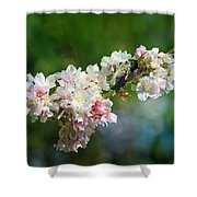Sitting Guard In The Cherry Blossoms Shower Curtain