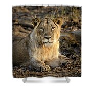 Sitting Majestically Shower Curtain