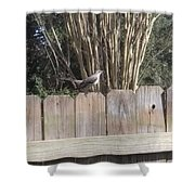 Sitting On A Fence  Shower Curtain