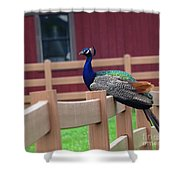 Sitting Peacock Shower Curtain
