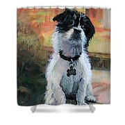 Sitting Pretty - Black And White Puppy Shower Curtain