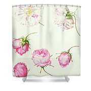 Six Heads Of Old Fashioned Roses Shower Curtain