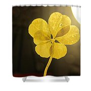 Six Leaf Clover In Studio 2 Shower Curtain