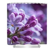 Six Petals Double Happiness Shower Curtain