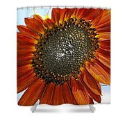Sizzling Hot Sun Flower Shower Curtain