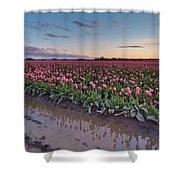 Skagit Valley Tulip Reflections Shower Curtain