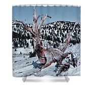 Skating Pine Shower Curtain