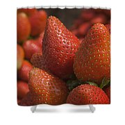 Skc 4703 Tempting  Shower Curtain