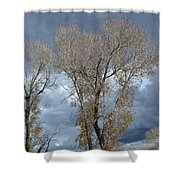Skeleton Trees Shower Curtain