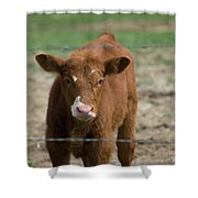 Skeptical Calf Barbed Wire Shower Curtain