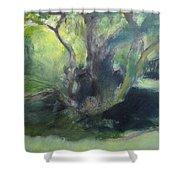 Sketch Of A Shady Glade. Shower Curtain
