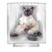Sketch Of Regal Himalayan Cat - Not Shower Curtain